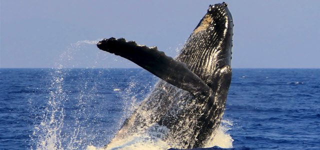 Home-Whale_Watch